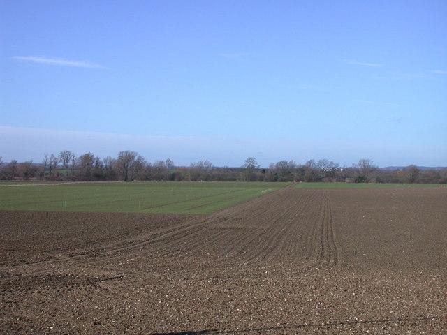 Farmland west of the M11