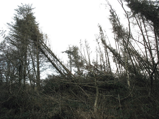 Storm damaged section of the Coedyfrochas Forest