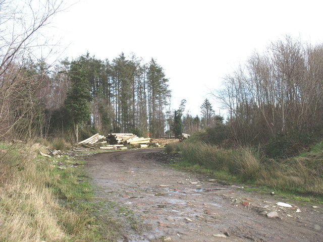 Logging at Coedyfrochas