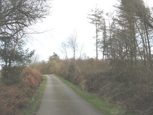 View east along the northern edge of Coedyfrochas Forest