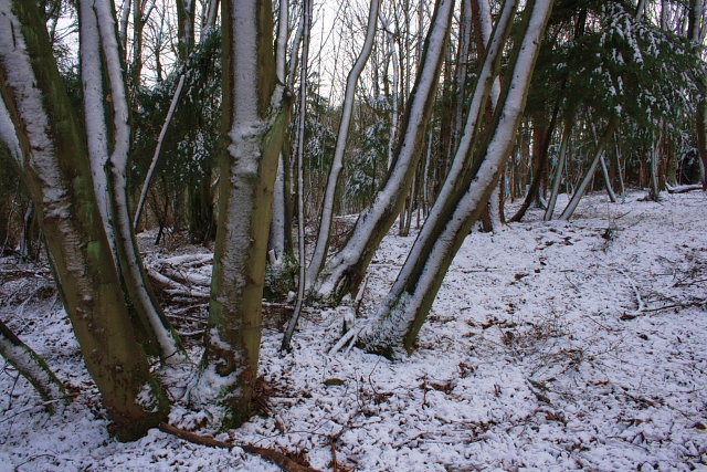 Bousdale Wood