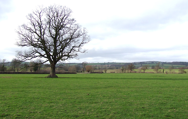 Fields south of Diddlebury, Shropshire