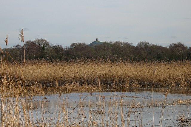Loxton's Marsh