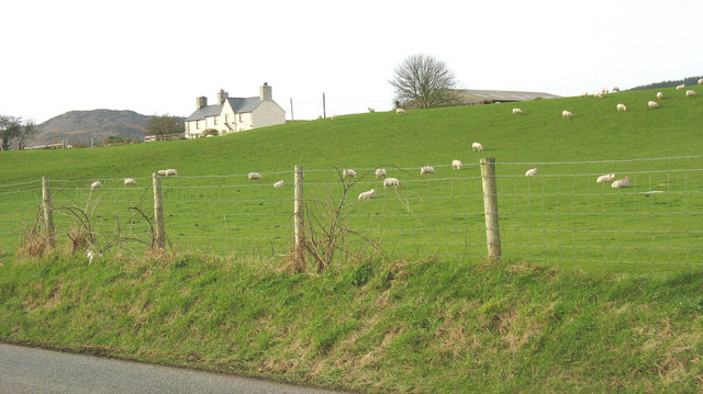 Sheep grazing at Frochas