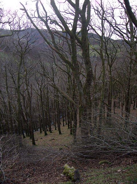 Woodland slope above the Afon Hengwm