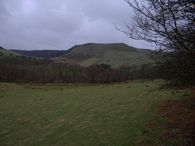 Grassland by the Nant Cwm yr Erw