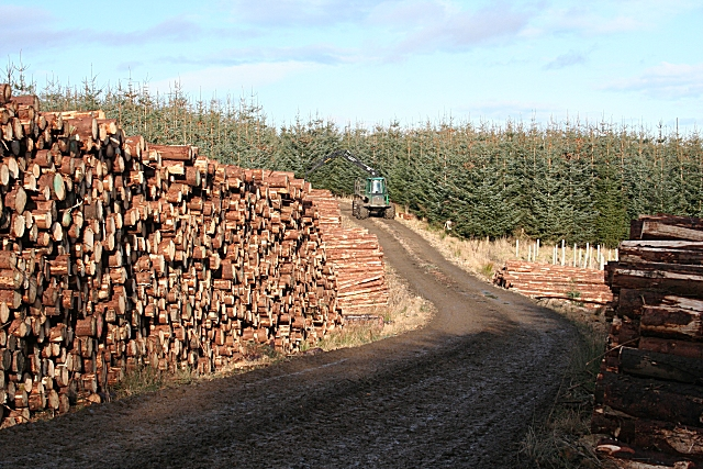 Timber Stacks