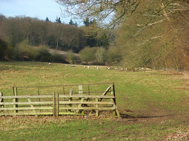 Pasture, Bradfield