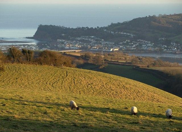 Fields above Bishopsteignton