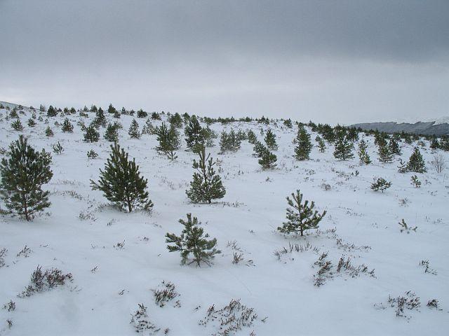 Native woodland below Creag Dubh
