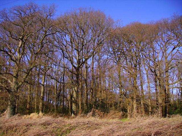 Chandlers Ford  - Zionshill Copse