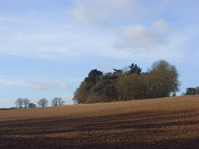 Farmland and copse, Bradfield
