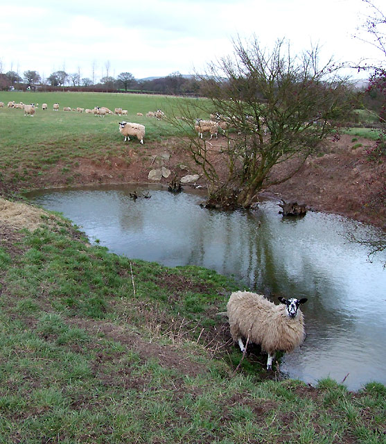 Pool in Sheep Field, Sutton Hill, Shropshire