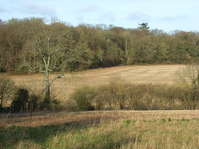 Farmland beside Ashampstead Common