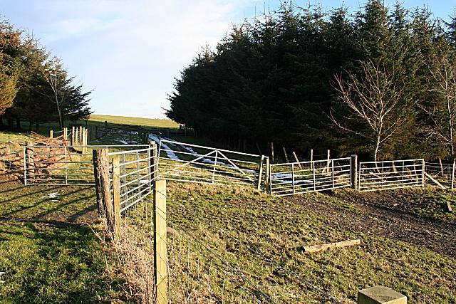 A Plethora of Gates