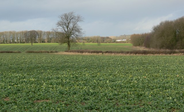Countryside north of Thurlaston Lane