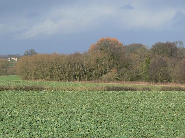 Woodland near Normanton Turville