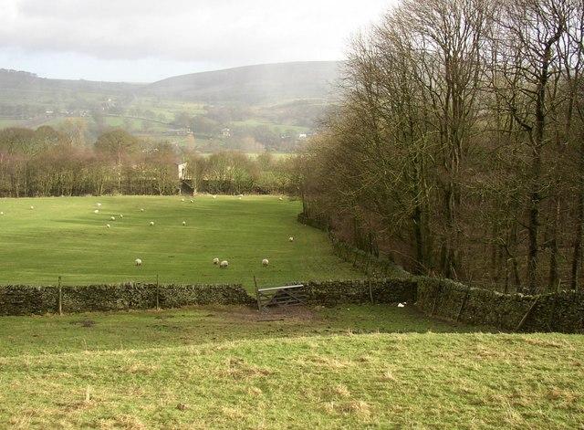 Field, wood and bridge, Draughton