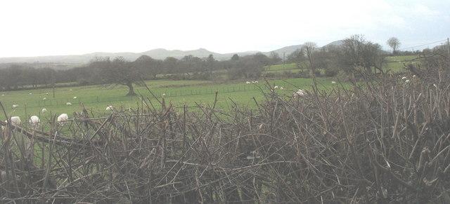 Grazing land at Ty Newydd Farm