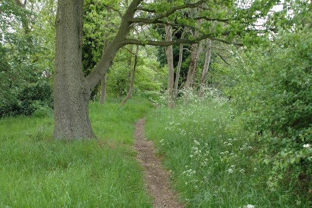 Footpath through Bridgnorth woods