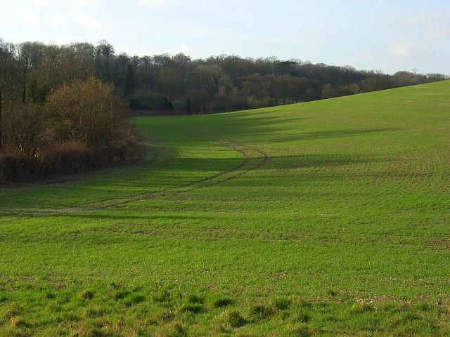 Woods and farmland, Ashampstead