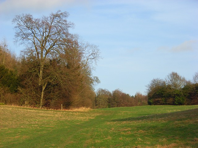 Woods and grassland, Ashampstead