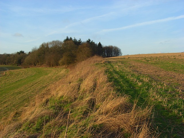Copse and field margin, Ashampstead