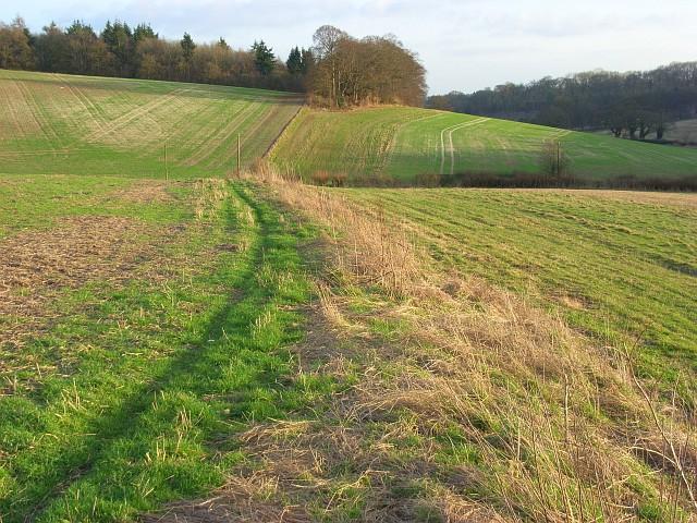 Field margins, Ashampstead