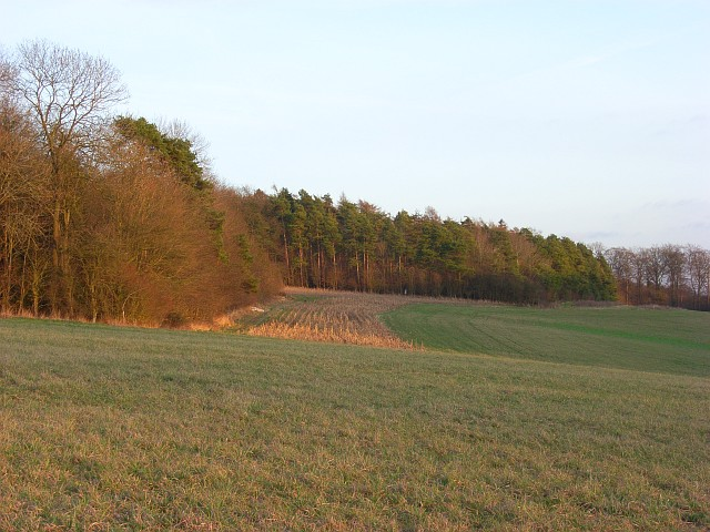 Downland and copses, Ashampstead