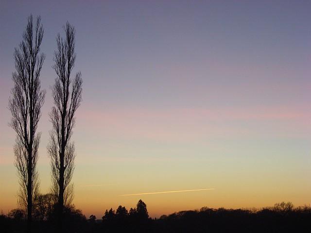 Poplars after sunset, Yattendon