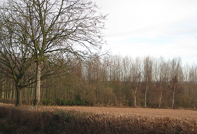Small deciduous  wood east of Minnett Farm