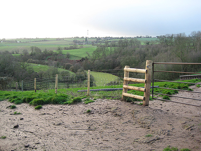 Woodland above Garren Brook