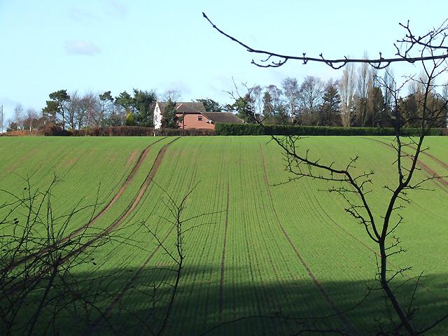 Crop Field  west of Wombourne, Staffordshire