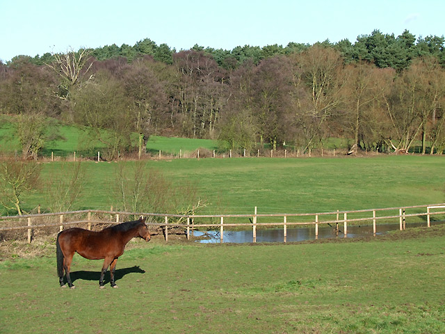 Grazing Land by Spittlebrook Mill, Staffordshire