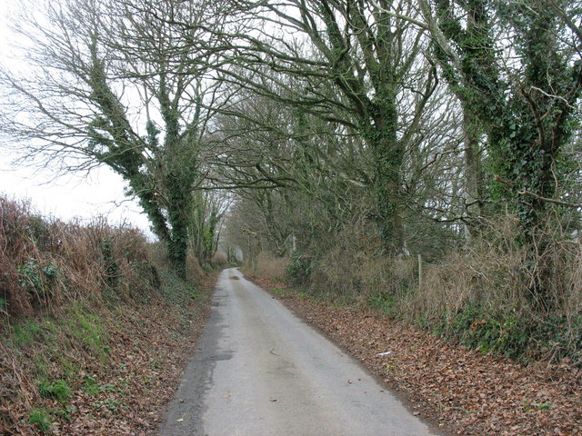 Tree-lined minor road between Llannor and Pont Bodfel