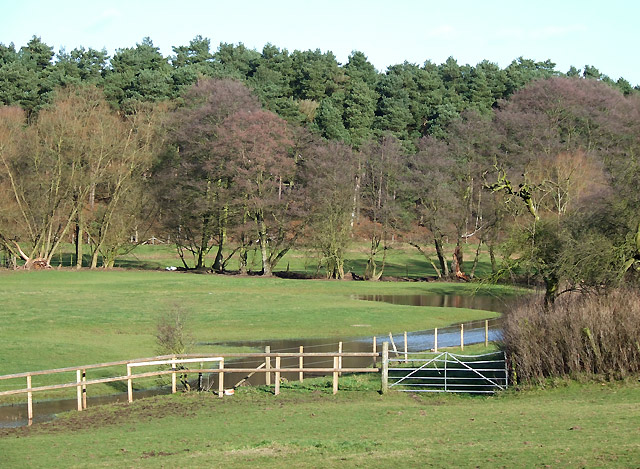 Pasture,Woods and Spittle Brook, Staffordshire