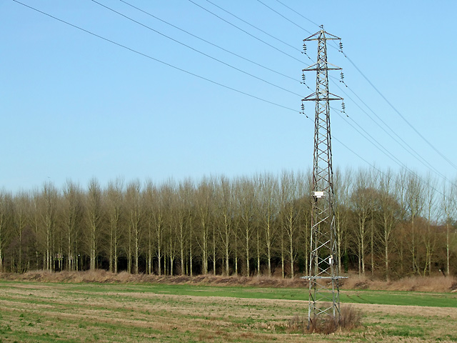 Poplars and Pylon near Ashwood, Staffordshire