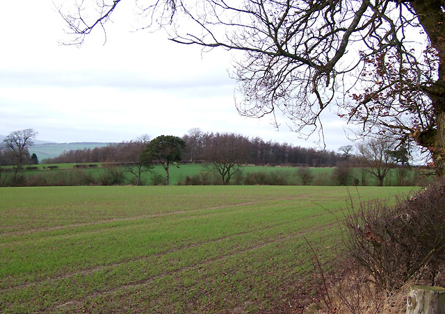 Crop Field and Sutton Hill Coppice, Shropshire