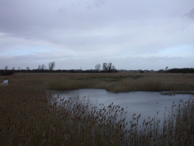 Reed beds, Woodwalton Fen NNR