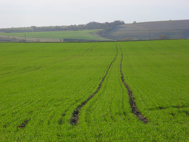Farmland, Blewbury