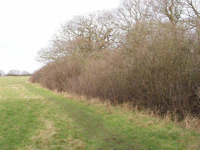 Old hedge by meadow, Horsenden Hill