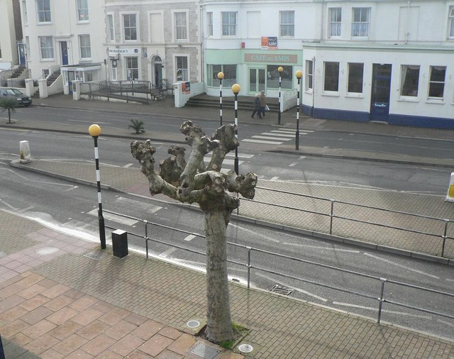 Ryde: zebra crossing and knobbly tree