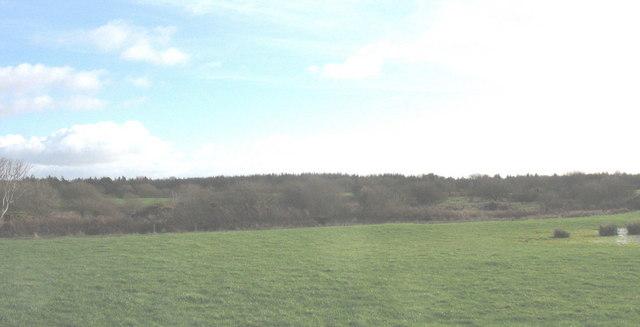 View across grazing land towards Coed Mynydd-mawr