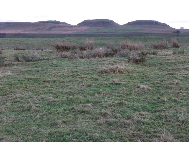 Thirlwall Common