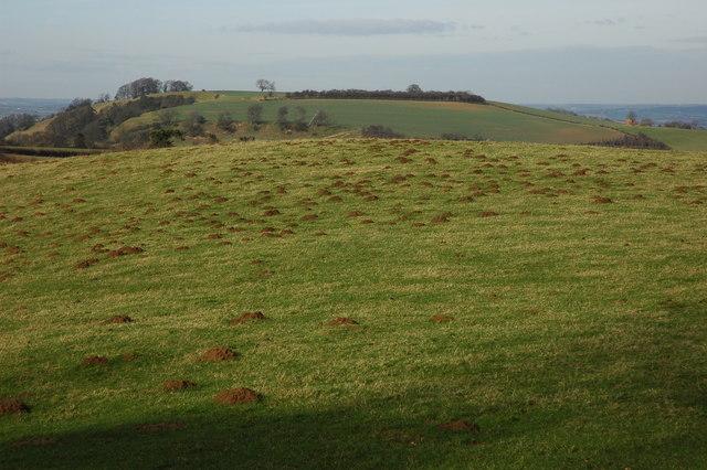 Mole infested field, Hidcote Barton