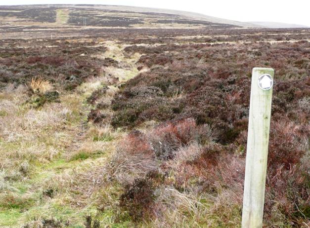 Track on Mynydd Varteg Fawr