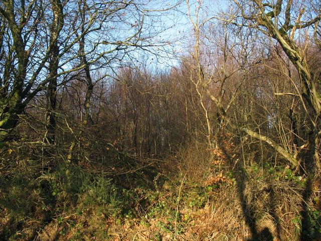 Coedyfrochas woodlands