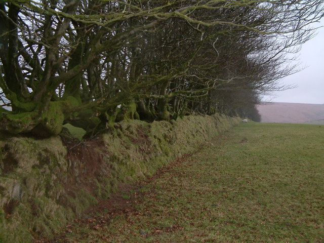 Beech trees and boundary wall