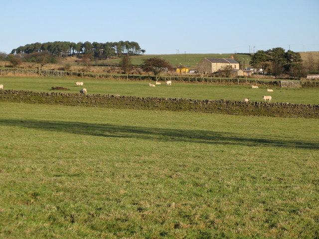 Pastures west of Catton (5)