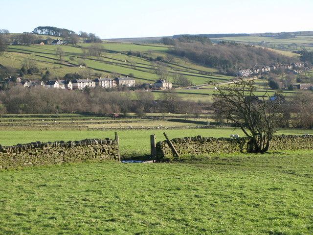 Pastures west of Catton (6)